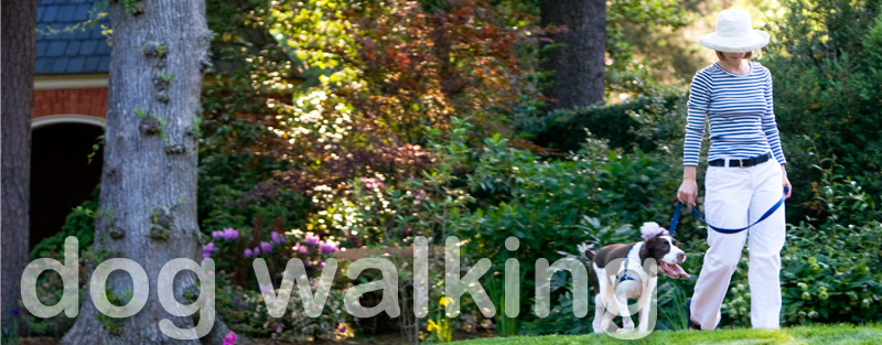 welcome to Walk and Wag