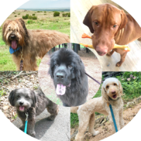 National Dog Week: Featured Breeds! | Walk And Wag